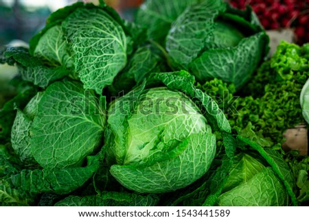 Picture of beautiful fresh kale