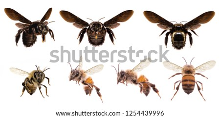 picture of bees on white background, bee on backs flying and other details, macro photography of insects #1254439996