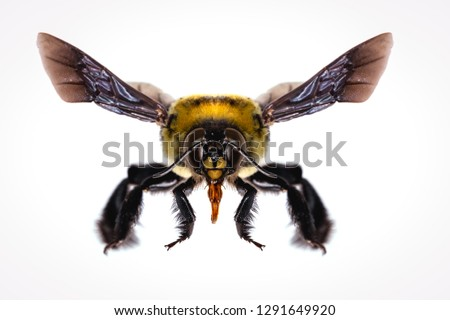 picture of bees on white background, bee on backs flying and other details, macro photography of insects #1291649920