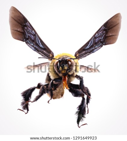 picture of bees on white background, bee on backs flying and other details, macro photography of insects #1291649923
