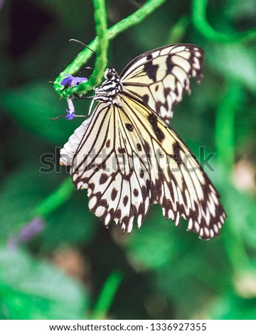Picture of black and white butterfly on purple flower categorized as butterfly food. Green background.
