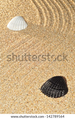 picture of bottom of sand, with lines and two shells