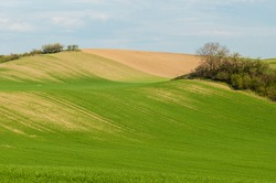 Picture of cultivated agricultural landscape on spring.
