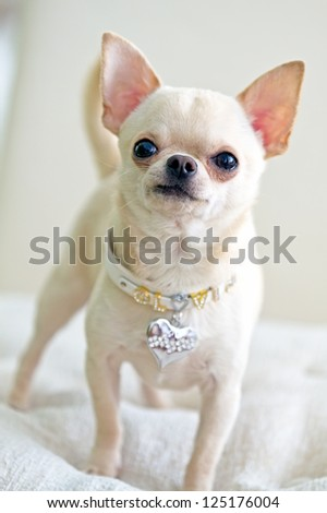 picture of cute dog