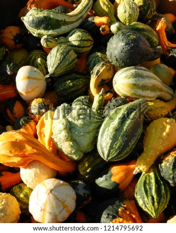Picture of decorative pumpkins at market, pumpkins for Halloween party