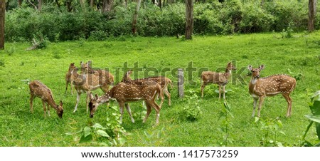 picture of deers captured in the daytime in Bandipur national park