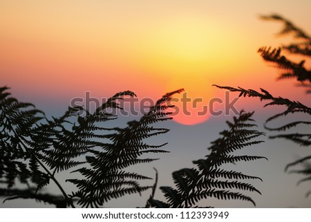 picture of fern leaves in front of the rising sun