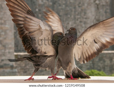 Picture of fighting doves