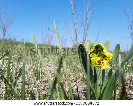 Picture of flowers with bags. Photos with Yellow Flowers. Flowers Image Ladybug on narcissus. Bug on flower.
