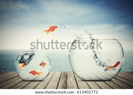 Shutterstock Picture of goldfish moving to better place in the transparent aquarium