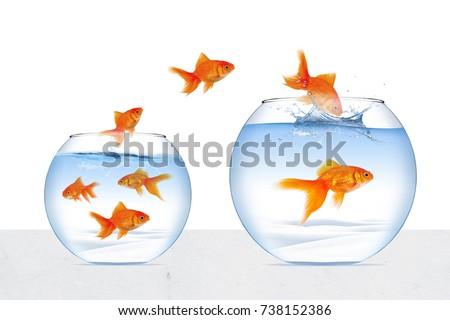 Picture Goldfish
