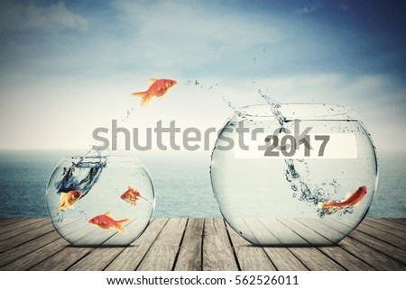 Picture of goldfish moving to larger aquarium with number 2017