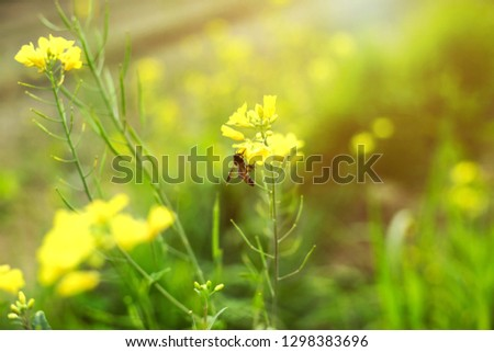 Picture of green leaves with beautiful mustard yellow flowers.