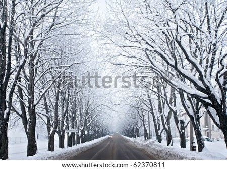 Picture of grey frozen trees and winter urban road