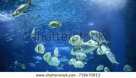 Picture of group of fish swimming underwater #718670812