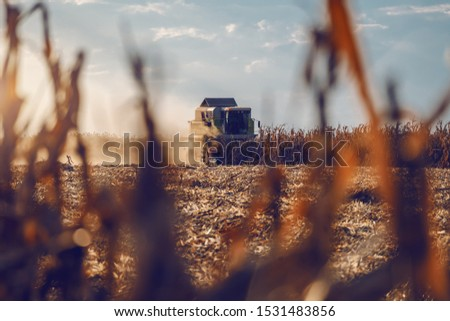 Picture of harvester in corn field harvesting in autumn. Husbandry concept. #1531483856