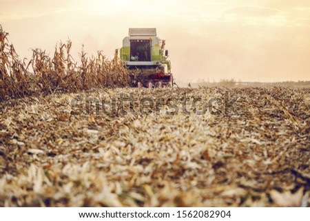 Picture of harvester in corn field harvesting in autumn. Husbandry concept.