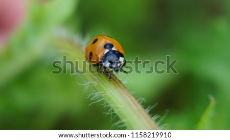 Picture of ladybug in the grass. High-quality macro image of ladybug in nature.