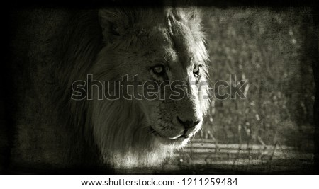 Picture of lion in vintage style, grunge background