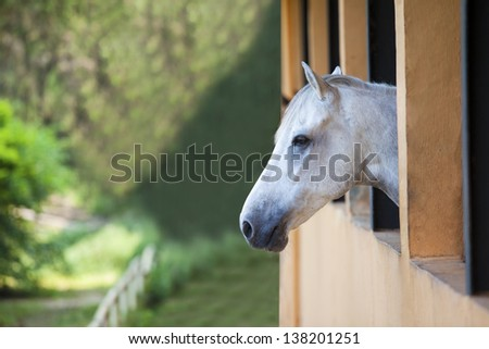 Picture of one horse staring at the green landscape