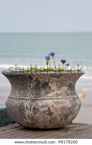 picture of purple lotus in ancient pot