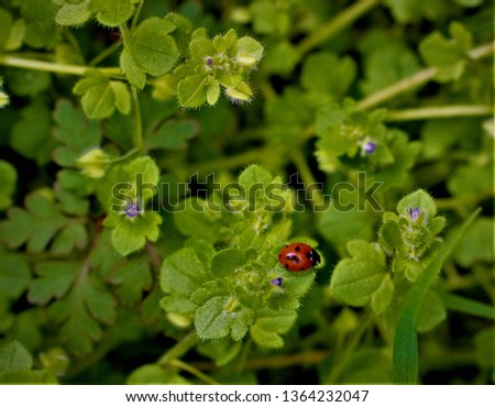 picture of small ladybug on green tree