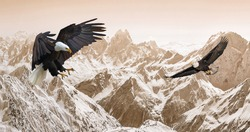 Picture of snowy mountains with hawks