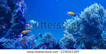 picture of the aquarium. Colorful coral and fish