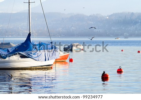 Picture of the boats, near which are flying seagulls. In the background the snowy Alps, lit sunset light, Zurich.