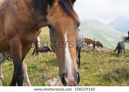 Picture of the horses that graze in the mountains of Tibet, the Himalayas.