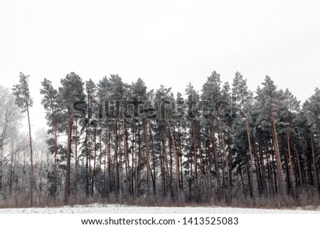 picture of the landscape, which has a forest, snow-covered land and gray sky