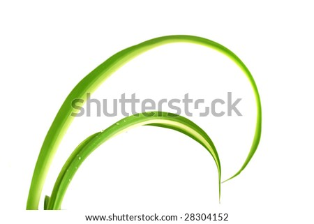 Picture of the long leaves of green plants
