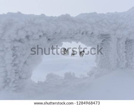 Picture of three running alaskan huskies, taken through the arch of a fence. The fence is covered in frost and snow, and is slightly blurry.