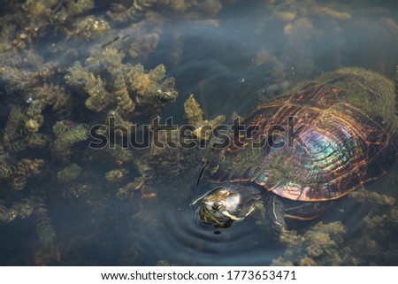 picture of turtle with oil on its shell