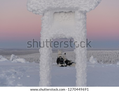 Picture of two alaskan huskies enjoying the view. The picture is taken through the posts of a sign covered in frost, and the landscape is bathed in arctic light and snow