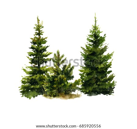 Picture of two spruces and a small pine-tree hand painted in watercolor