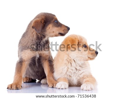 picture of two stray puppies looking to a side, over white