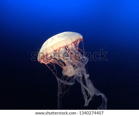 picture of underwater and jellyfish