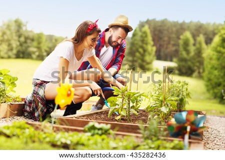 Picture of young couple planting organic vegetables and herbs