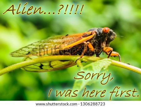 "Picture quote: ""Alien..? Sorry I was here first"" with a large alien looking  Kentucky's cicada insect with big red eyes. Nature photography typography 2017"