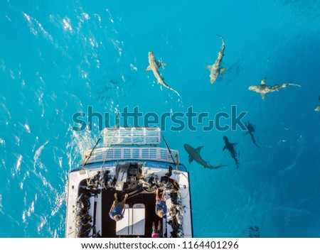 Picture shows a Drone view on sharks at the Bahamas