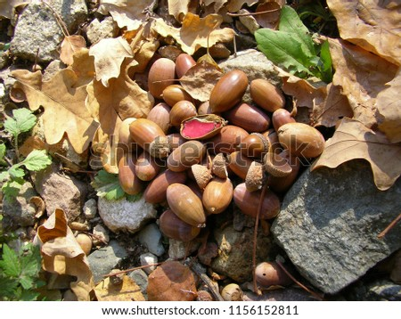 picture with acorns
