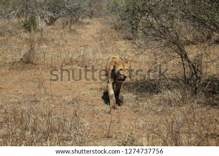 Pictures of animals in the Kruger National Park, South Africa