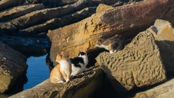 pictures of cats in rocks on the sea coast