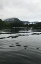 pictures of critter cove Nootka sound brattish Columbia