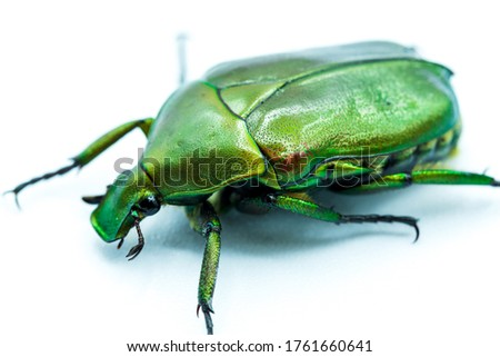 Photo of  Pictures of insects as beautiful as emerald green