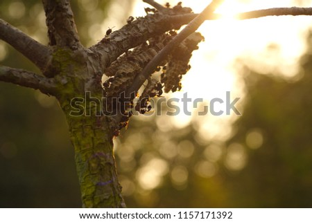 Pictures of old trees with wasp nest, help build a nest in the morning, bright sunlight is seen as a bokeh.
