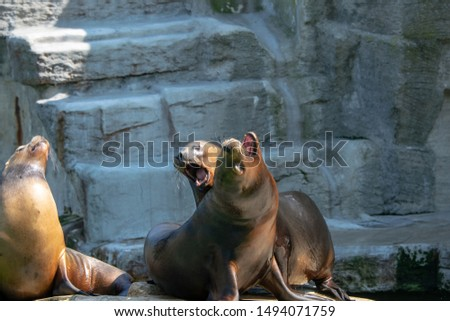 pictures of seals in the zoo