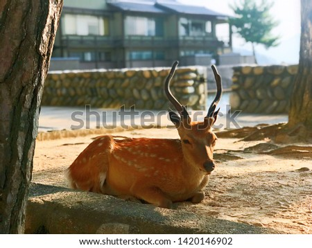 Pictures of the little deer in the park on the island in Japan