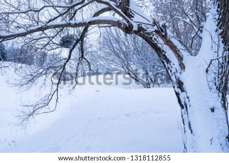 Pictures of winter. Winter transforms the nature around us. Rivers are covered with ice, snow falls asleep all around. Despite the cold - winter is a beautiful time of the year.
